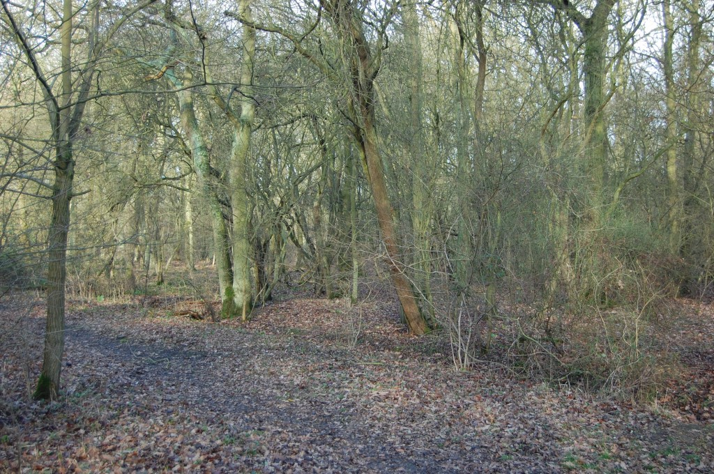 view of English woodland in february