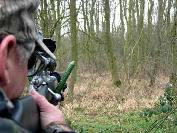 Man holding rifle taking aim at Muntjac